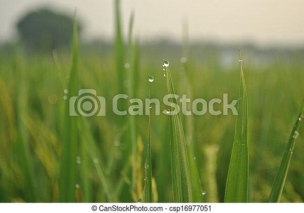 agricultura - csp16977051