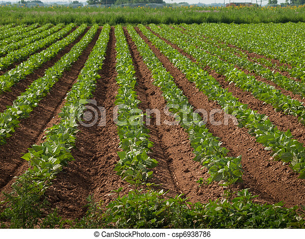 Agricultural land with row crops - csp6938786