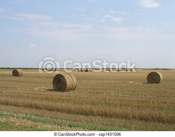 Agricultural landscape - csp1431596