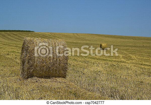 agricultural landscape with blue sk - csp7042777