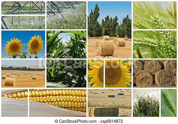 agriculture. - csp6914872