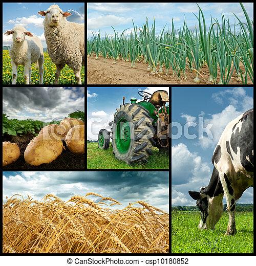 Agriculture collage - csp10180852