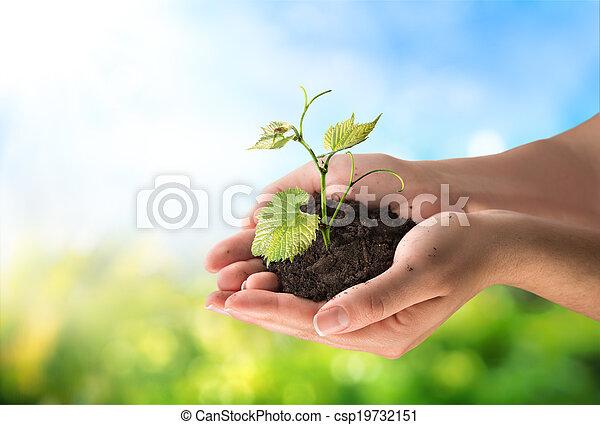 agriculture concept, little plant - csp19732151