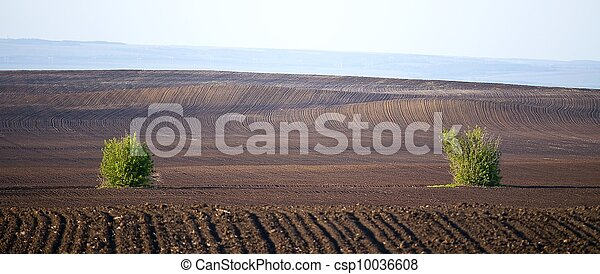 Agriculture field lines and two bus - csp10036608