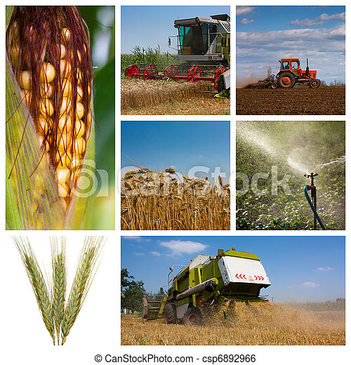 Agriculture montage - csp6892966