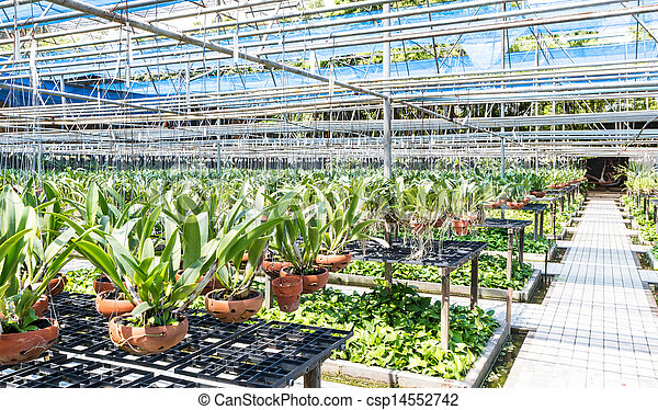 Agriculture orchid farm at thailand - csp14552742