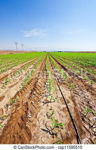 Agriculture - csp11595510