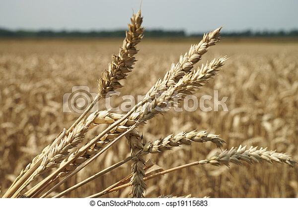 Agriculture - csp19115683