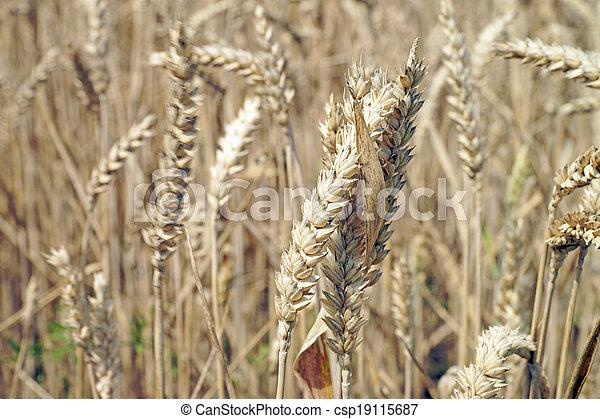 Agriculture - csp19115687