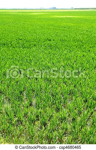 Agriculture rice field perspective in spain Valencia - csp4680465