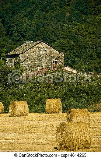 Agriculture - csp14614265