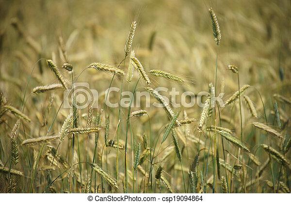 Agriculture - csp19094864
