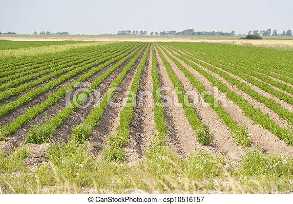 Agriculture - csp10516157