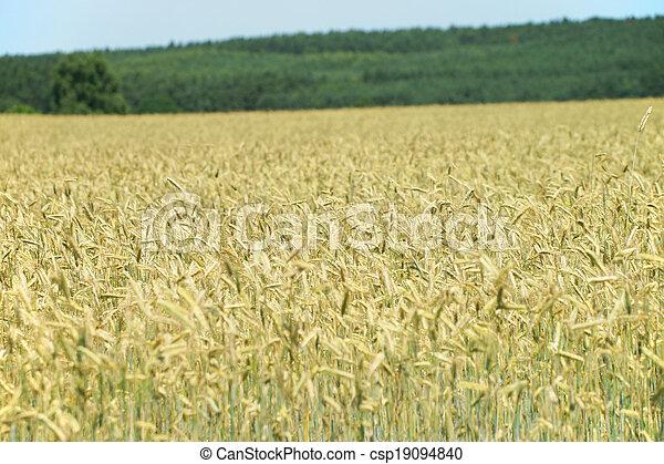 Agriculture - csp19094840