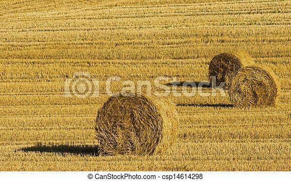 Agriculture - csp14614298