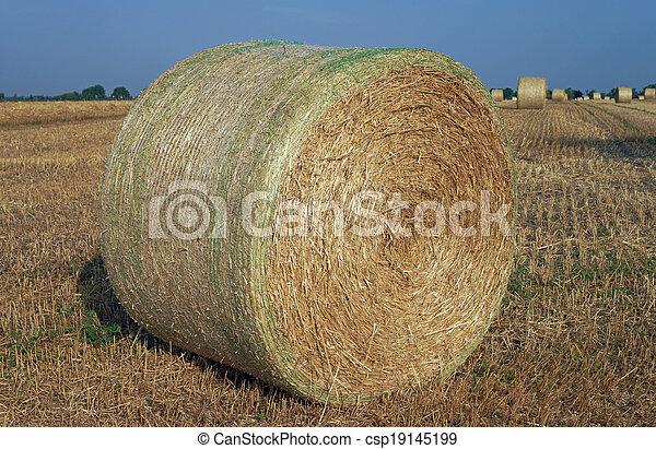Agriculture - csp19145199