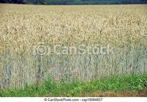 Agriculture - csp19094837