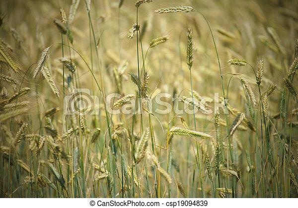 Agriculture - csp19094839
