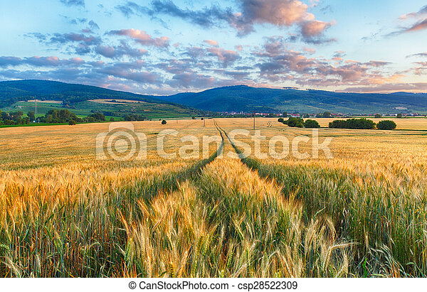 Agriculture - Wheat field - csp28522309