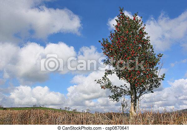 Amazing Agrifoglio, Inverno Albero   Csp0870641