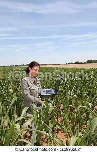 agronomist, kukurydziane pole - csp9962821