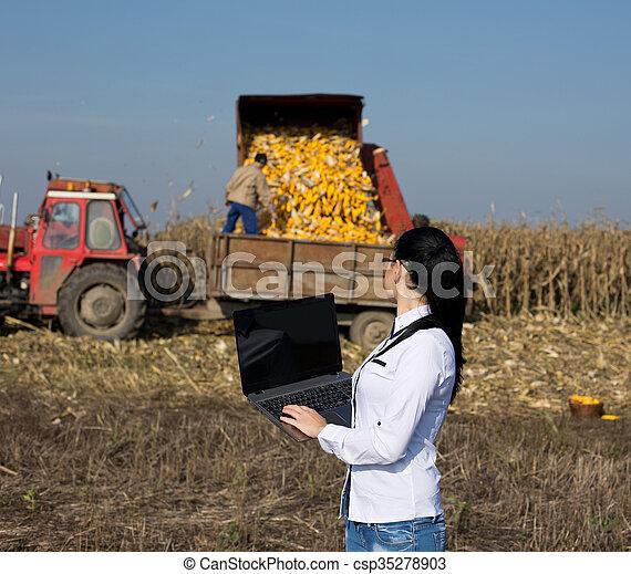 agronomist, laptop, kobieta, kukurydziane pole - csp35278903