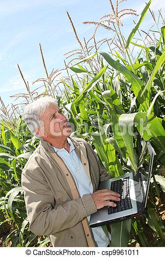 agronomist, laptop komputer, kukurydziane pole - csp9961011