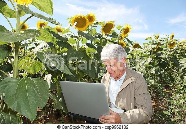 agronomist, laptop komputer, słoneczniki, pole - csp9962132