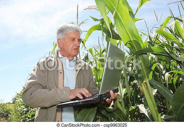 agronomist, laptop komputer, kukurydziane pole - csp9963025