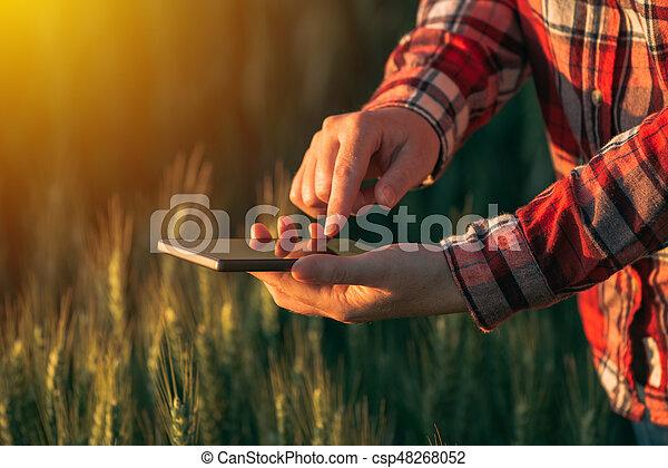 Agronomist using smart phone mobile app to analyze crop development