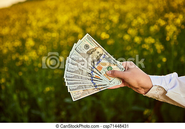 Agronomist woman or farmer holding money dollar banknote with blossoming cultivated canola field in background - csp71448431