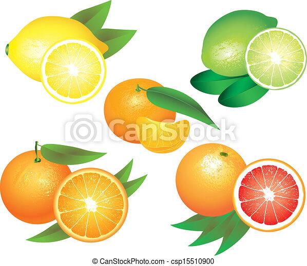 agrume, vettore, set, frutte - csp15510900