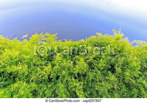 Un arbusto de agua - csp4257847