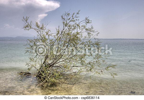 Un árbol creciendo en el agua - csp6836114