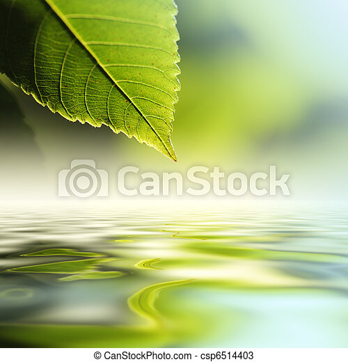 agua, encima, hoja - csp6514403