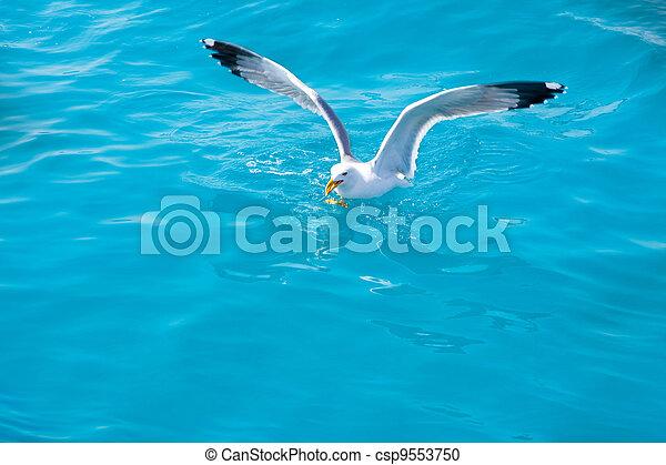 Gaviota en agua de mar en el océano - csp9553750