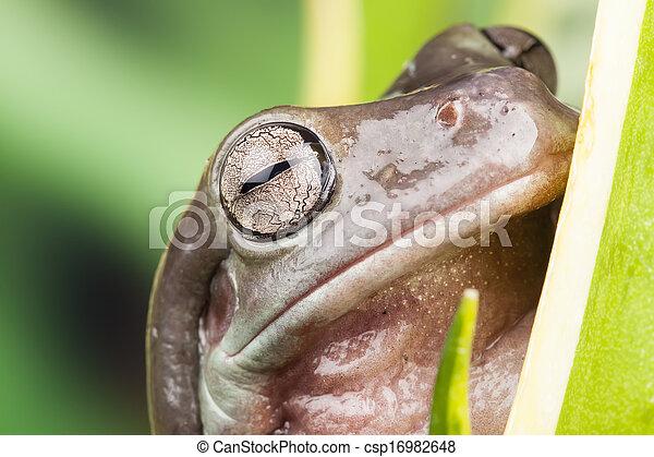 Pequeña rana en una planta en el agua - csp16982648