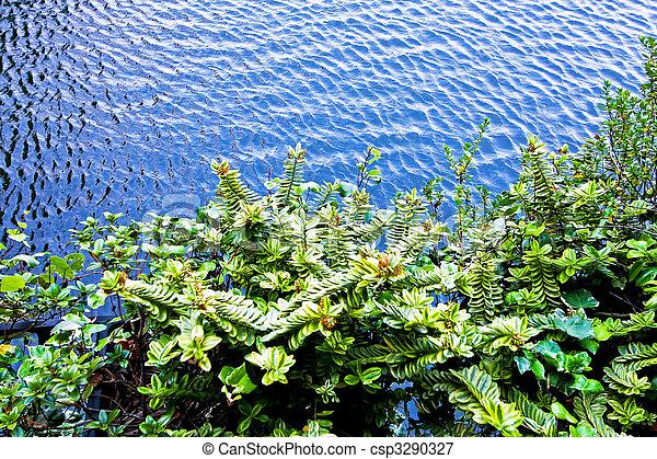Plantas y agua - csp3290327