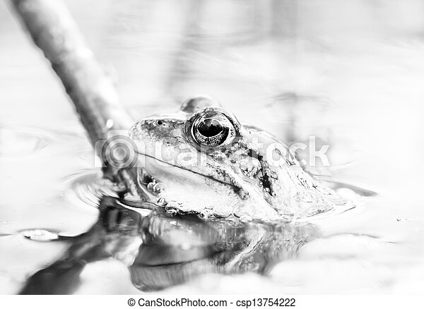 Rana en agua - csp13754222
