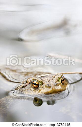 Rana en agua - csp13780445