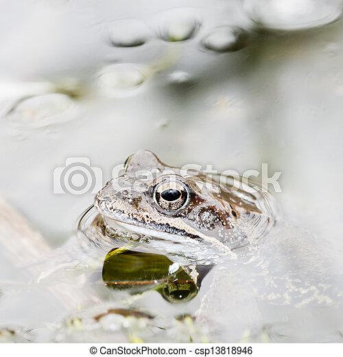 Rana en agua - csp13818946