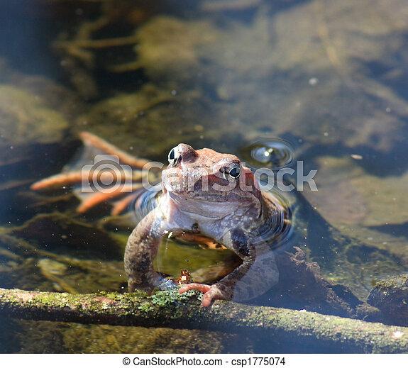 Rana en agua - csp1775074