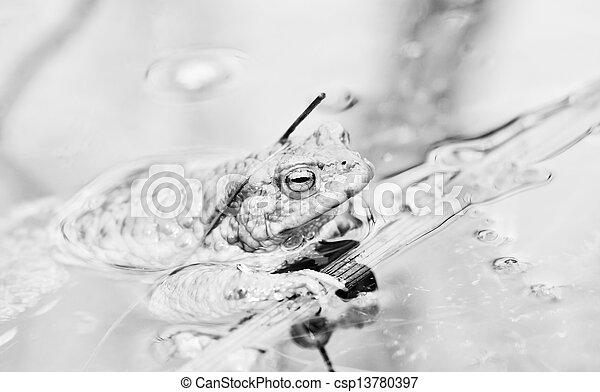 Rana en agua - csp13780397