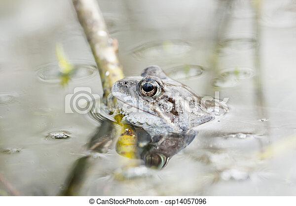 Rana en el agua - csp14057096