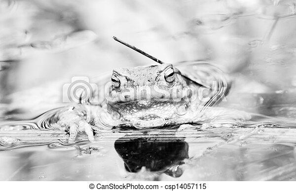 Rana en el agua - csp14057115
