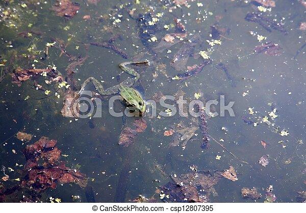 rana verde en agua - csp12807395