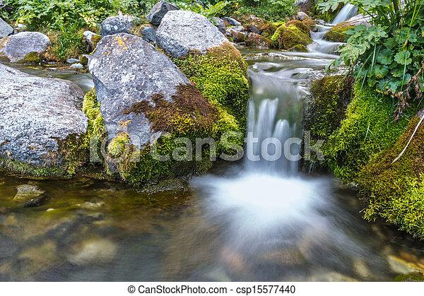 El verano de la naturaleza del arroyo - csp15577440