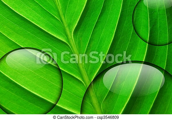Hoja verde con gota de agua - csp3546809