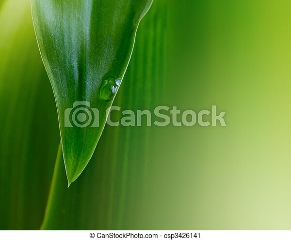 Hoja verde con gota de agua - csp3426141