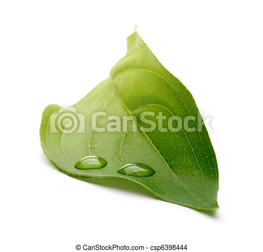 Hoja verde con gotas de agua - csp6398444